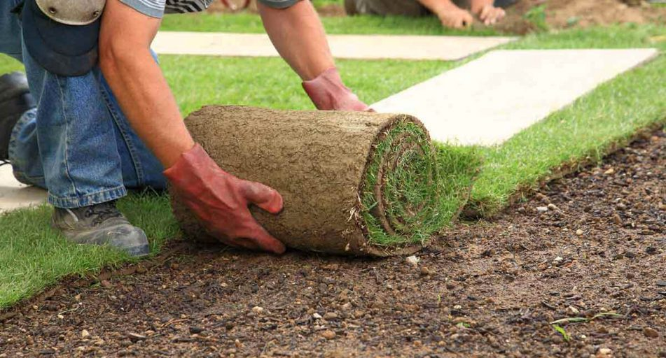 Roll Out Lawns