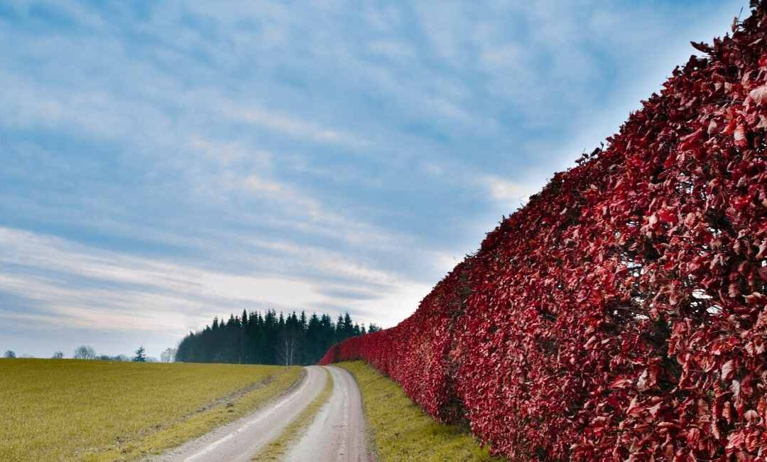 How to Maintain your Hedgerow